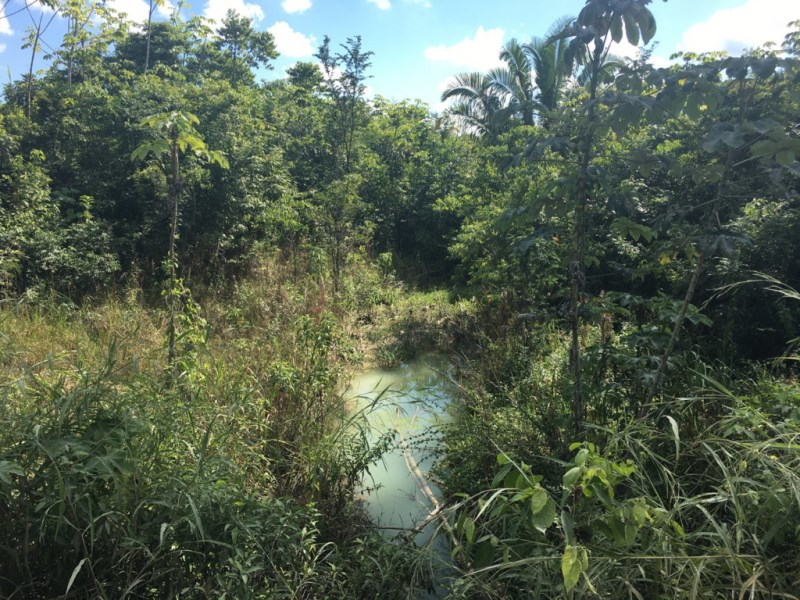 RE/MAX real estate, Belize, Belmopan, 25 Acres with Creek in Valley of Peace