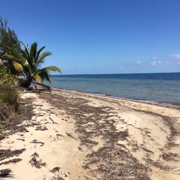 RE/MAX real estate, Belize, Placencia, PRICE REDUCED - Beachfront lot on Caribbean Way, Placencia