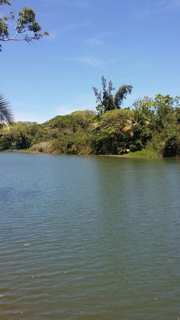 RE/MAX real estate, Belize, Hopkins, 7.4 Acres of Riverfront in Sittee River