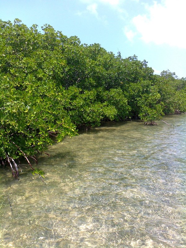 RE/MAX real estate, Belize, Dangriga, 6 Acres of Beachfront across from the Barrier Reef