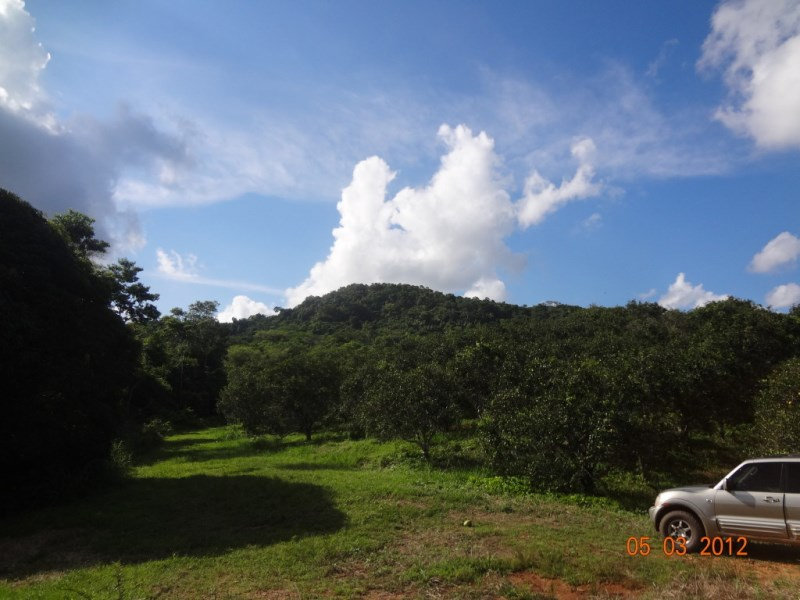 RE/MAX real estate, Belize, Silk Grass, 10 Acres with citrus in Mayflower