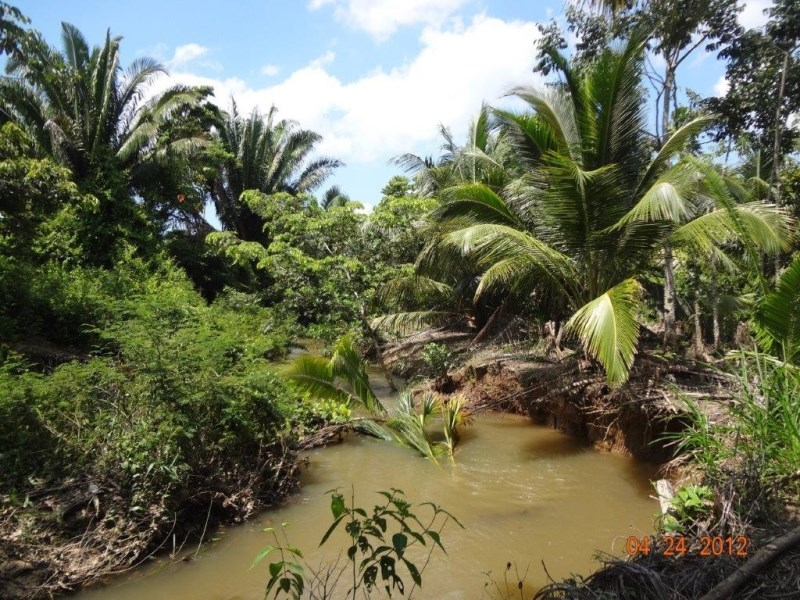 RE/MAX real estate, Belize, Independence, 35 Acre Coconut Farm with Creek by Redbank