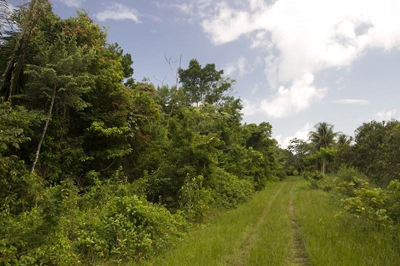 RE/MAX real estate, Belize, Dangriga, 40 Acres of Jungle with Creek