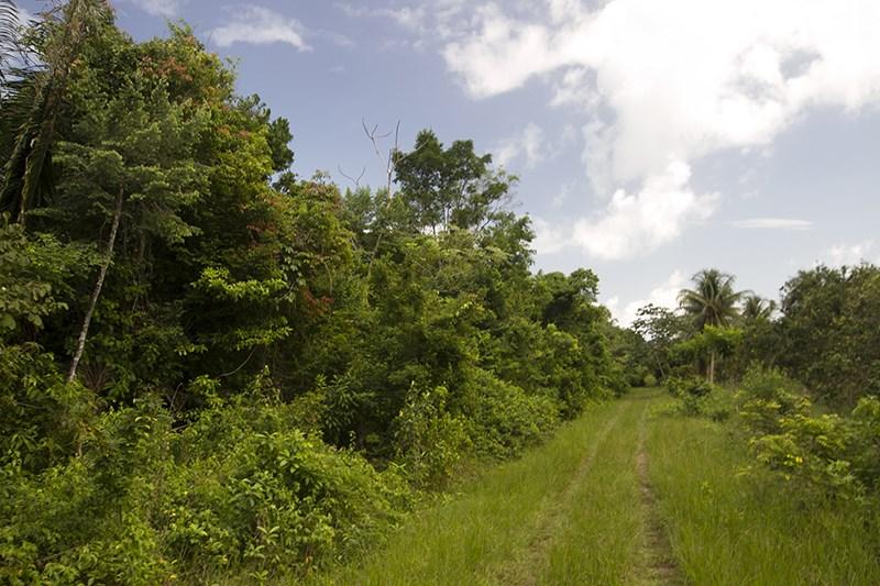 RE/MAX real estate, Belize, Dangriga, 40 Acres of Jungle with Creek