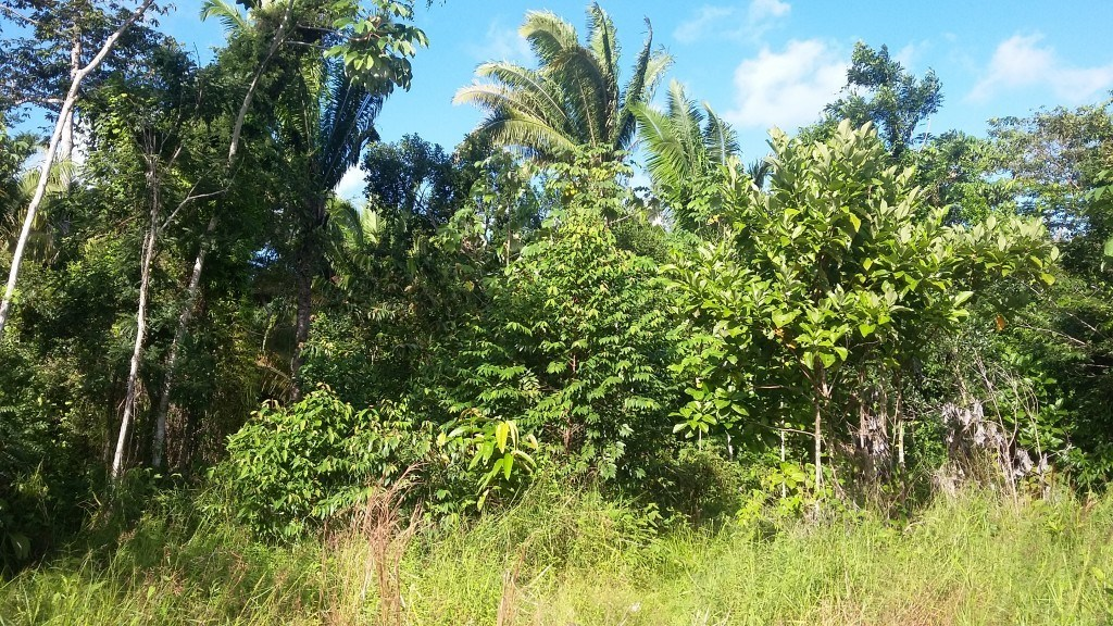 RE/MAX real estate, Belize, Belize City, 50 Acres with Stream off the Coastal Highway
