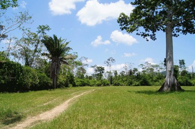 RE/MAX real estate, Belize, Belmopan, 300 Acres in Sibun River