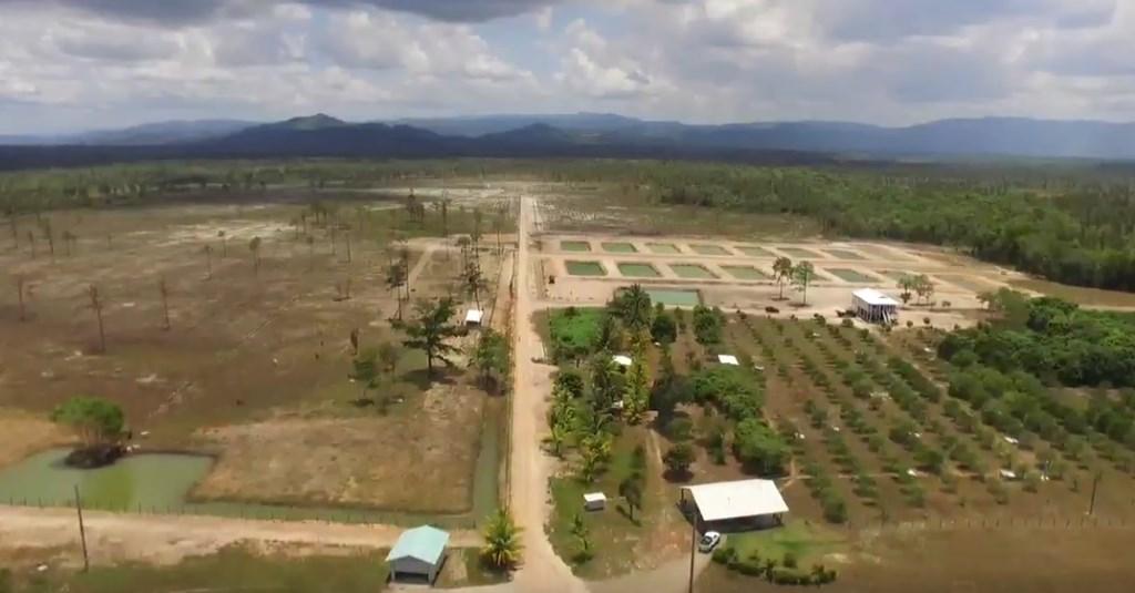 Remax real estate, Belize, Georgetown, Profitable Organic Farm