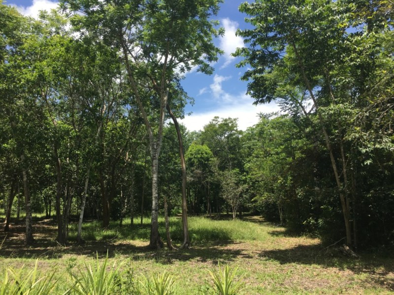 RE/MAX real estate, Belize, Spanish Lookout, 150 Acres of Fertile Jungle with 2 Creeks