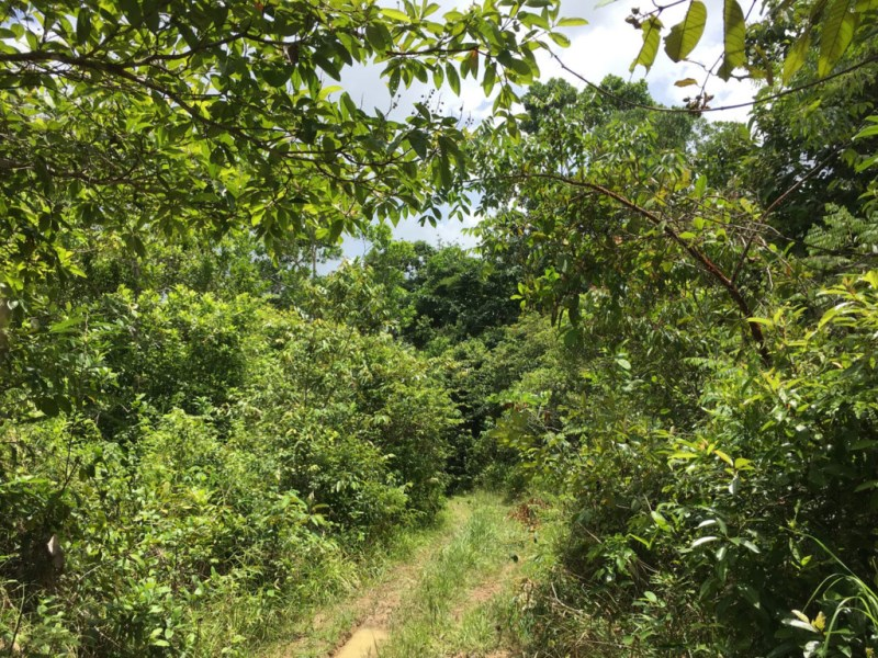 RE/MAX real estate, Belize, Hopkins, 2 - 47 Acre parcels with Creek in Mayflower