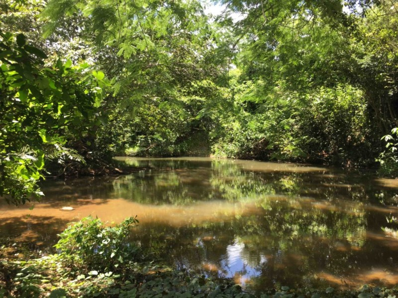 RE/MAX real estate, Belize, Hopkins, 18 Acres of Lush Jungle with Creek