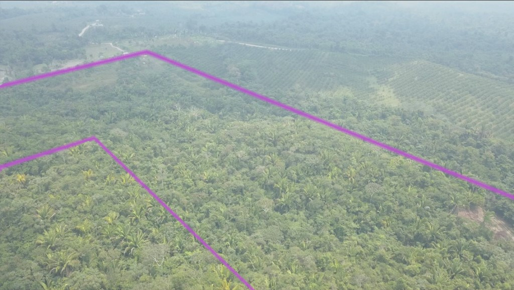 RE/MAX real estate, Belize, Dangriga, 100 Acre Fruit Farm off the Hummingbird Hwy