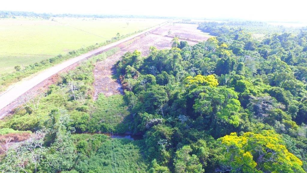 RE/MAX real estate, Belize, Hopkins, 19 Acre Farm on Southern Highway - 5 Miles from Beach