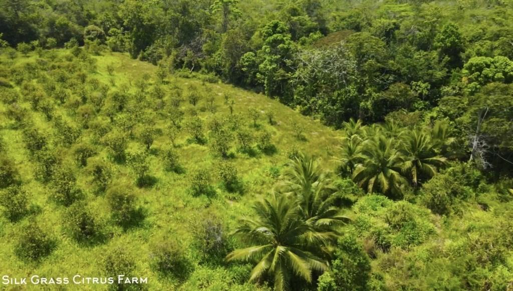 RE/MAX real estate, Belize, Silk Grass, Silk Grass Citrus Farm