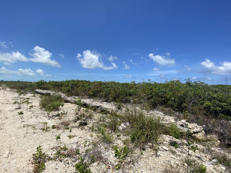 RE/MAX real estate, Belize, San Pedro, Secret Beach Land with High Elevation & Lagoon View