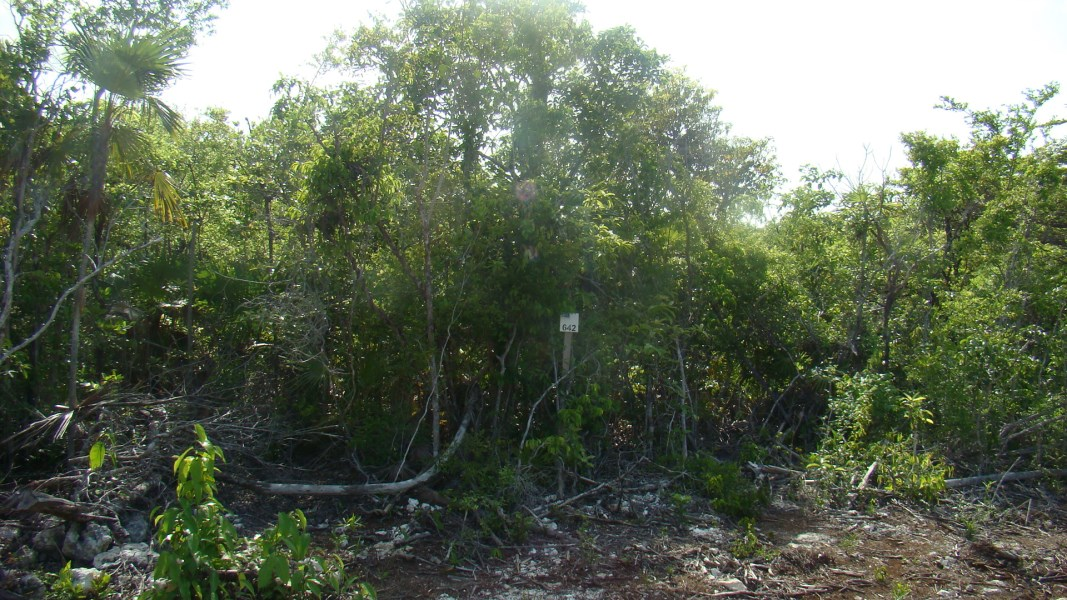 RE/MAX real estate, Belize, Ambergris Caye, San Pedro Residential Property near Secret Beach $31,000USD