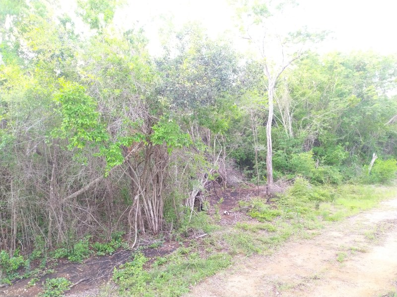 RE/MAX real estate, Belize, Sarteneja, Sarteneja Farm Land