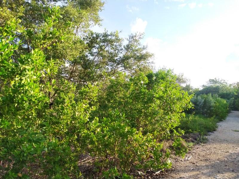 RE/MAX real estate, Belize, Santeneja, Sarteneja Ocean View Lot