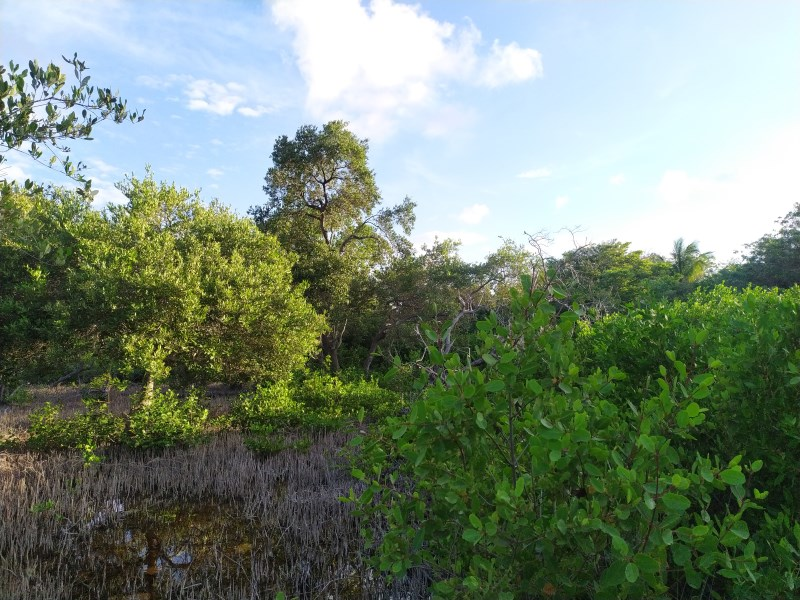 RE/MAX real estate, Belize, Sarteneja, Sarteneja village Ocean view property