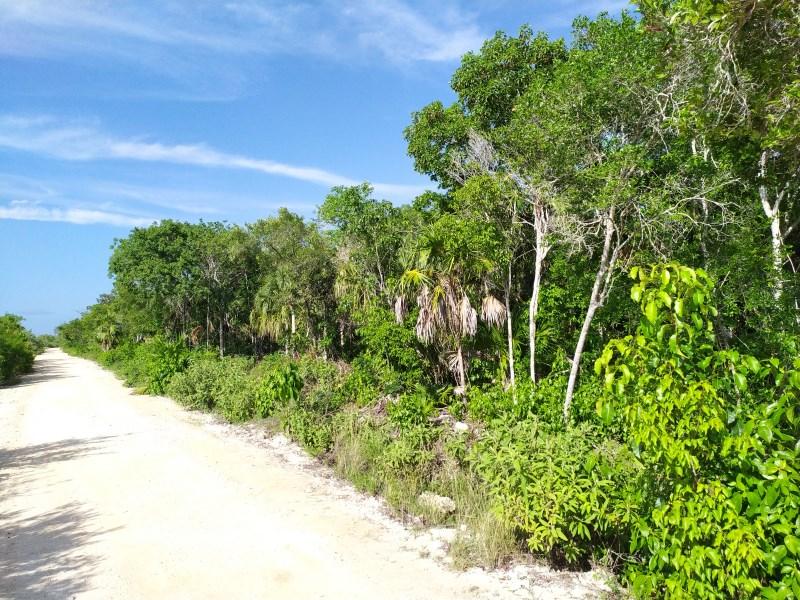 RE/MAX real estate, Belize, Sarteneja, Sarteneja Village Los Pinos Area Ocean View Property