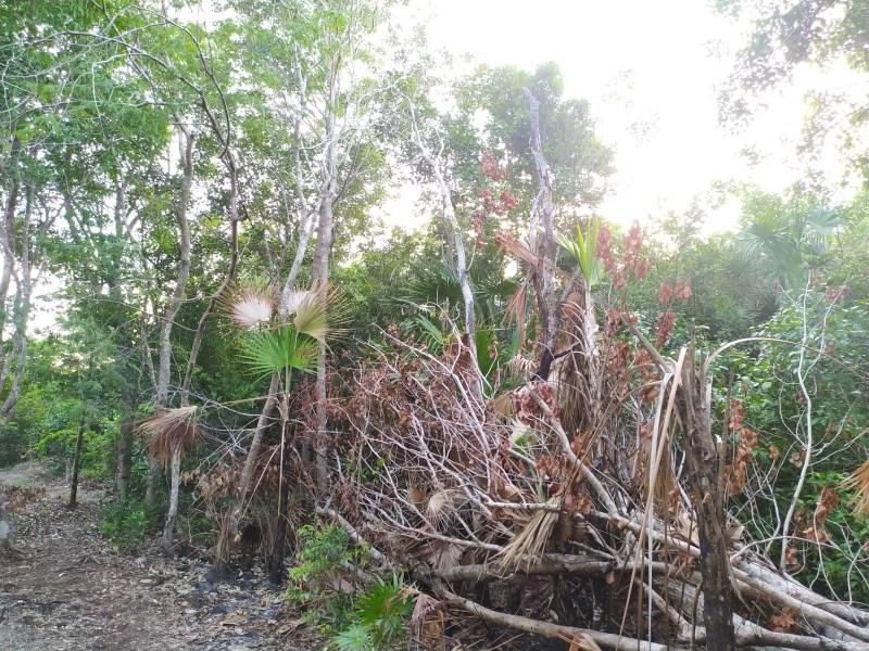 RE/MAX real estate, Belize, Sarteneja,  Sarteneja village residential lot
