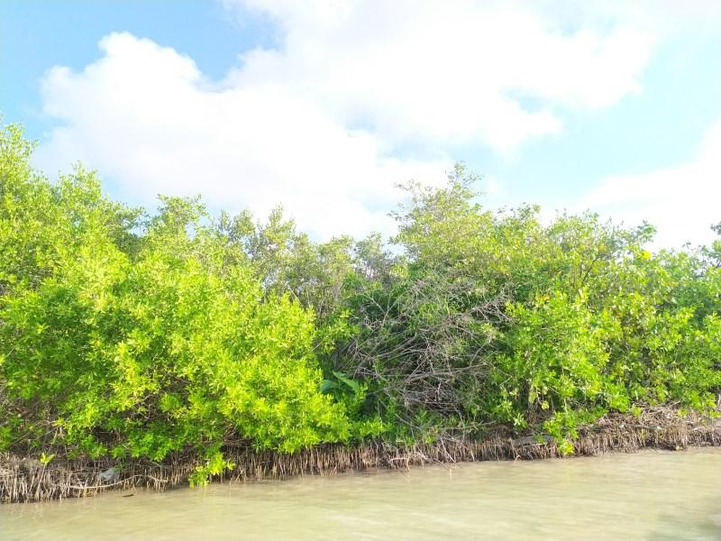 RE/MAX real estate, Belize, Sarteneja, 5 Acres of Sea front property for sale in Sarteneja village