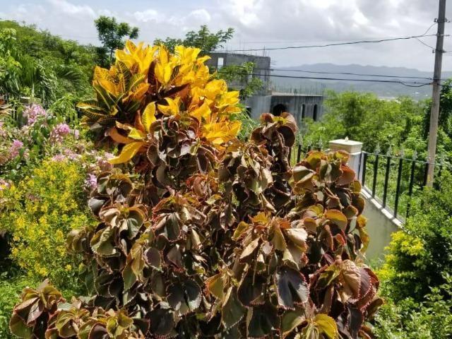 RE/MAX real estate, Jamaica, Montego Bay, PORTO BELLO HEIGHTS St. James Montego Bay