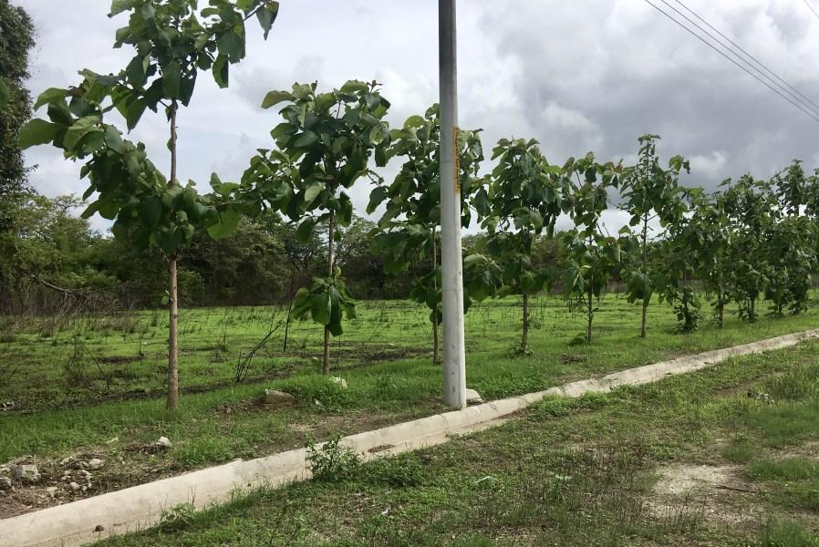 Remax real estate, Costa Rica, Liberia, An All Terrain Property (4)