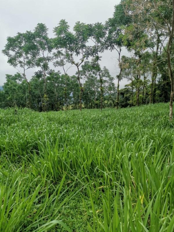 Remax real estate, Costa Rica, Savegre de Quepos, Dos Bocas Farm