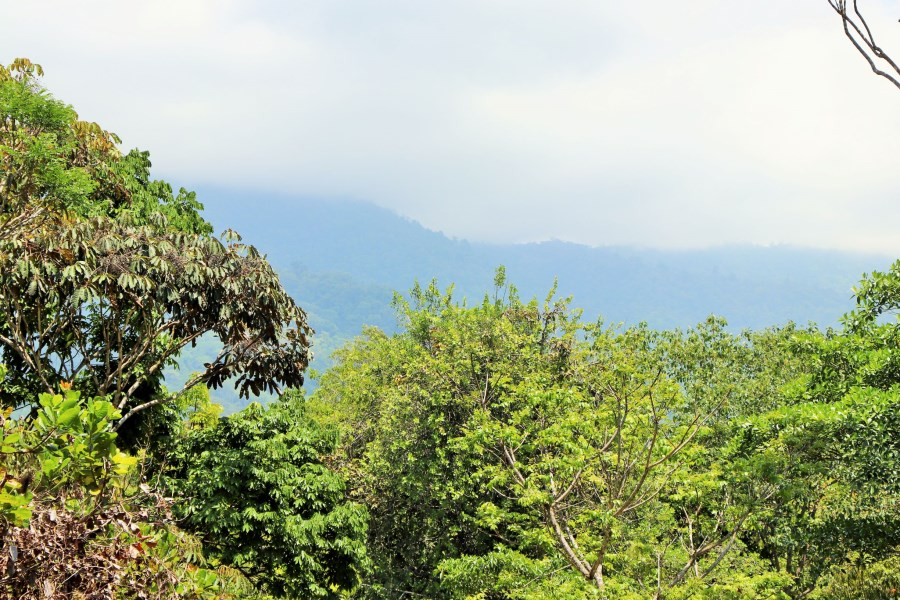 Remax real estate, Costa Rica, Ojochal, 6 ACRE LOT WITH JUNGLE, BORDERING THE RIVER.