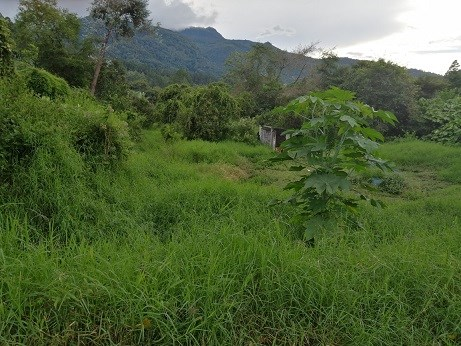 Remax real estate, Panama, Boquete - Los Naranjos, Great property for investment, commercial or residential use or a mix of both