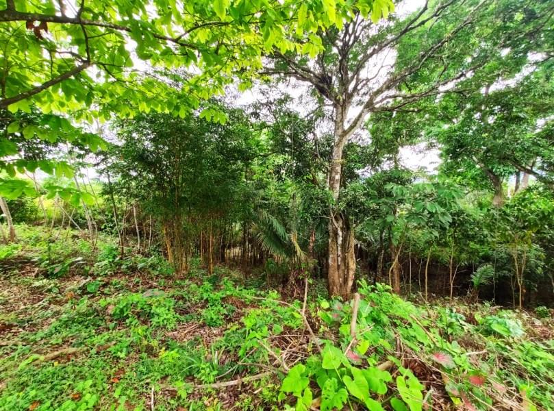 Remax real estate, Panama, La Chorrera - El Arado, Venta de terreno en Río Congo, Chorrera