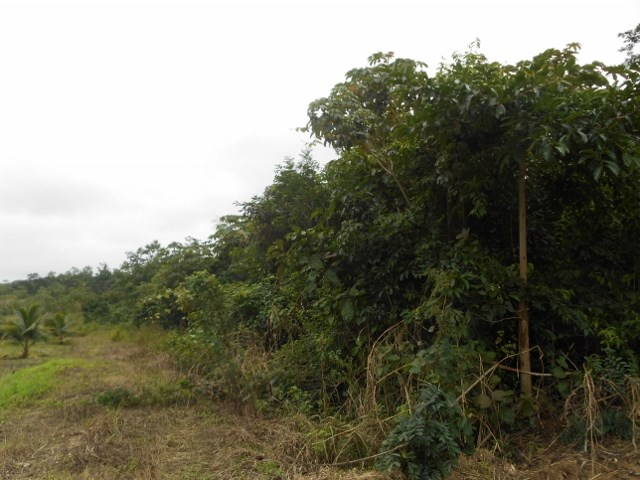 RE/MAX real estate, Belize, Camelote, # 2398 - 10 ACRES OF LAND - near BELMOPAN CITY