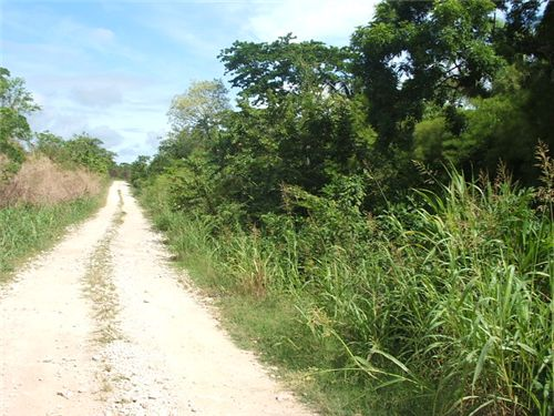 Remax real estate, Belize, Buena Vista, # 2249 - 231 ACRES OF LAND - near SPANISH LOOKOUT, CAYO